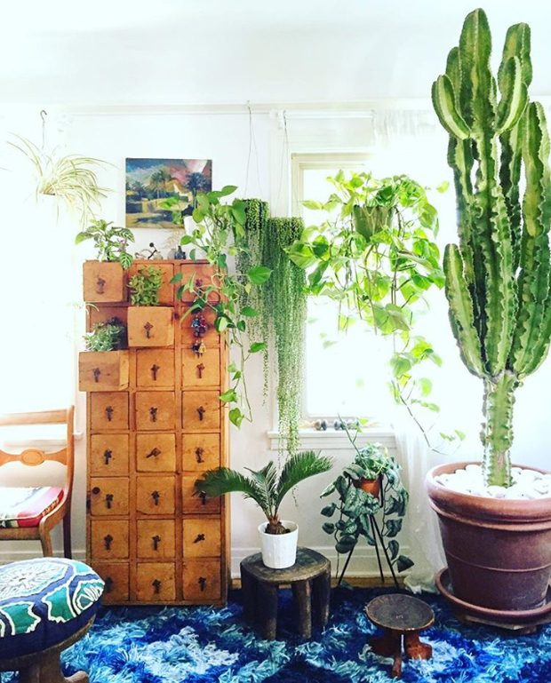 Are You Plant Crazy?